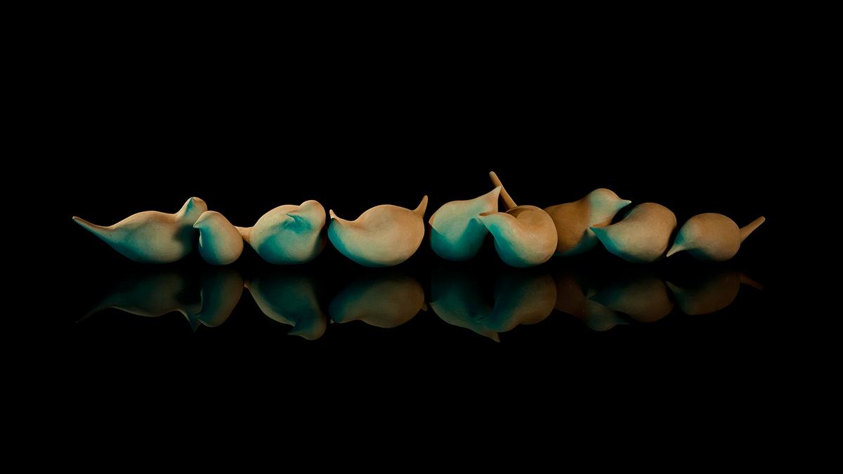 مرغان آوازه خوان - عکاس : محسن بازیانفر